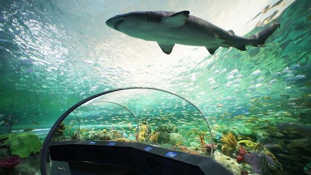 Ripley's Aquarium of Canada em Toronto