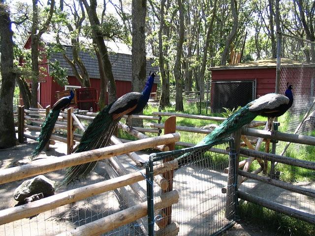 Beacon Hill Children's Farm em Victoria
