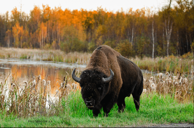 Parque Nacional Elk Island